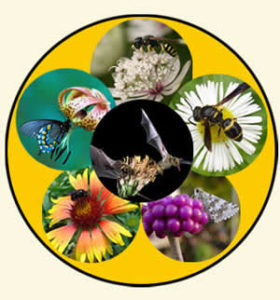 animalwheel-pollinators